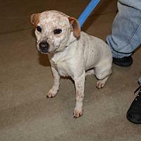 Adopt A Pet :: Piglet - Hopkinsville, KY