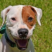 Adopt A Pet :: 10311494 PEPPER - Brooksville, FL