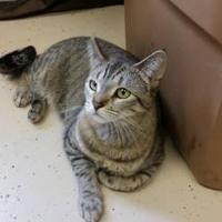 Adopt A Pet :: Zelda - Waupun, WI