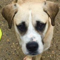 Adopt A Pet :: Hamlet - Charleston, WV