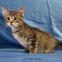 Adopt A Pet :: STUART - Bucyrus, OH