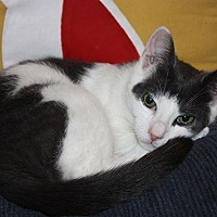 Adopt A Pet :: Nash (LE) - Little Falls, NJ