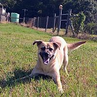 Adopt A Pet :: Eve Plumb - Jersey City, NJ