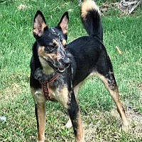 Adopt A Pet :: Ringo - Orange, CA