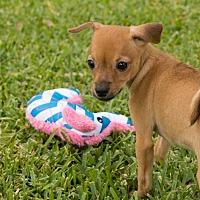 Adopt A Pet :: Gretl - La Habra Heights, CA