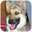 Photo 2 - German Shepherd Dog Dog for adoption in Portsmouth, Rhode Island - Ula
