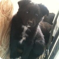 Adopt A Pet :: Fluffyl - Phelan, CA
