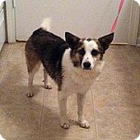 Adopt A Pet :: Happy - Columbia, SC