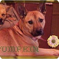 Adopt A Pet :: Pumkin - Hancock, MI