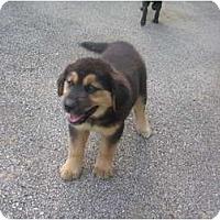 Adopt A Pet :: Esther - Glastonbury, CT