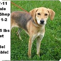 Adopt A Pet :: # 537-11 @ Animal Shelter - Zanesville, OH