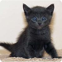 Adopt A Pet :: Stoli - La Jolla, CA