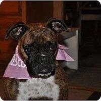 Adopt A Pet :: Sasha - Grafton, MA