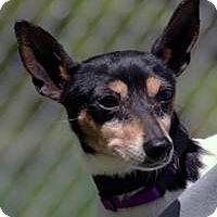 Adopt A Pet :: Wisteria - Mt Gretna, PA