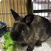 Adopt A Pet :: Bungee - Williston, FL