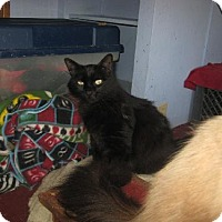 Adopt A Pet :: Shannon - Coos Bay, OR