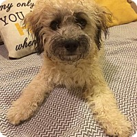 Adopt A Pet :: Macgregor - Chicago, IL
