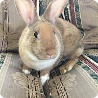 Adopt A Pet :: Daffodil - Watauga, TX