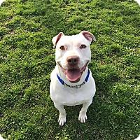 Adopt A Pet :: Poochski! - Emmett, MI