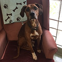 Adopt A Pet :: Dudley - Stahlstown, PA