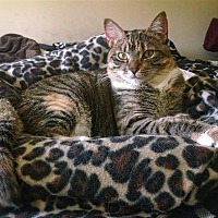 Adopt A Pet :: Sissy - Savannah, GA
