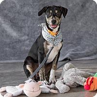 Adopt A Pet :: Jasmine - Vancouver, BC