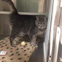 Adopt A Pet :: RIPLEY - THORNHILL, ON