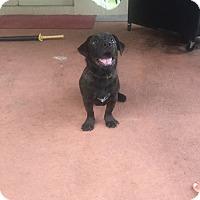 Adopt A Pet :: Sparky - Oviedo, FL