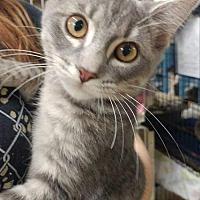 Adopt A Pet :: Partner - Trenton, MO