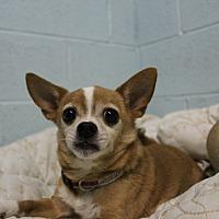 Adopt A Pet :: Emmit - Muskegon, MI