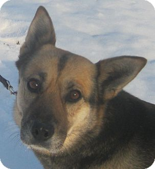 German Shepherd Dog Mix Dog for adoption in Hillsboro, Ohio - Roxie
