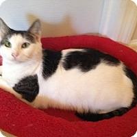 Adopt A Pet :: Ella - Jacksonville, NC