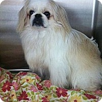 Adopt A Pet :: Rueben~Adopted - Troy, OH