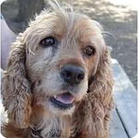 Adopt A Pet :: Darla - San Diego, CA