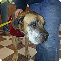 Adopt A Pet :: Dempsy, PENDING-in New England - kennebunkport, ME