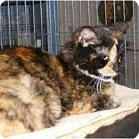 Adopt A Pet :: Della - Newburgh, NY