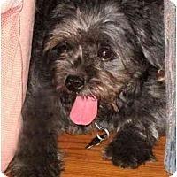 Adopt A Pet :: Friday - Mays Landing, NJ