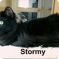 Adopt A Pet :: Stormy - Medway, MA