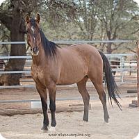 Adopt A Pet :: Chase - El Dorado Hills, CA