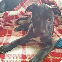 Adopt A Pet :: Olive - North Olmsted, OH