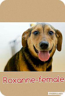 Hound (Unknown Type)/Beagle Mix Dog for adoption in Harrisonburg, Virginia - Roxanne (Pom-cr)