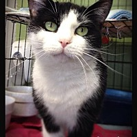 Adopt A Pet :: Pearl - Hartford City, IN