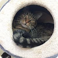 Adopt A Pet :: TIGGER - Hamilton, NJ