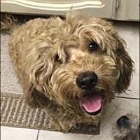 Adopt A Pet :: LUCKY 3 - Chandler, AZ