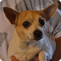 Adopt A Pet :: Sasha - Pahrump, NV
