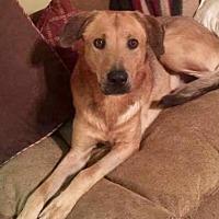 Adopt A Pet :: Highway - Branford, CT