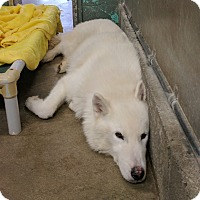 Adopt A Pet :: Grace - Middletown, NY