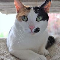 Adopt A Pet :: Monroe - Michigan City, IN