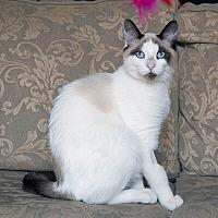 Adopt A Pet :: Florizel - Mississauga, Ontario, ON