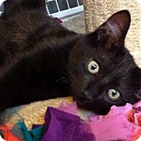 Adopt A Pet :: Saphire - Escondido, CA